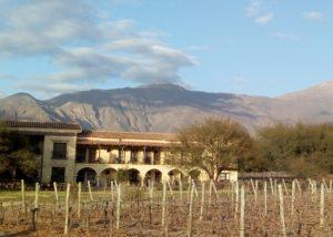 tukma slender rows of vines on vineyard against amazing estate