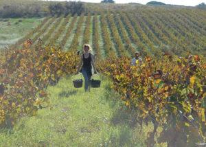 Un Coin Sur Terre- working in the vineyard