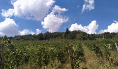 Vineyards Of Vallerosa Bonci Winery