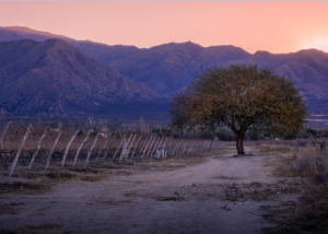 vasija secreta amazing vineyards, mountains and tree on the suns