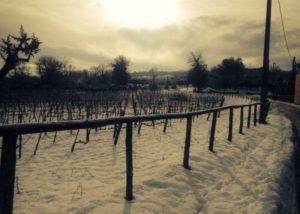 Vineyards Of Vigna Villae In Taurasi Winery