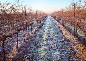 Vineyard Of Vigneti Zanatta Winery