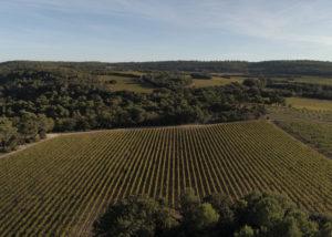 vineyards of villa baulieu