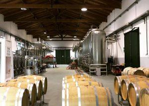Barrels Lined Up Several Rows At The Cellar Of Villa Di Corlo Winery