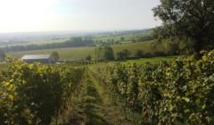 vineyard at vin du pays de herve