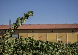 vinaguarena cellar vineyard against yellow estate in lovely spain