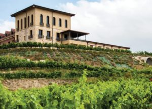 Bodegas Manzanos green vineyard during summer in Spain