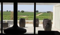 vineyard view from Dehesa De Luna winery in Spain