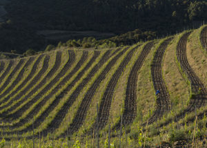 Maius Viticultors vineyard view located in Spain