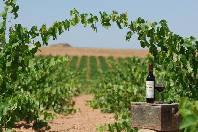 Vinicola de Tomelloso vineyard located in Spain