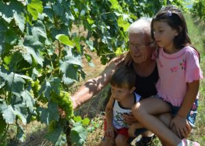 Visiting Vineyard Of Vitivinicola Bellati Winery