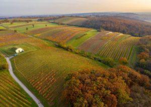 Aerial Vineyard View Of The Weingut Stefan Zehetbauer Winery