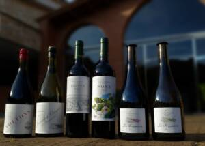 Wine bottles of La Conreria d'Scala Dei lined up