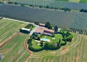Aerial View of Estates of Ancilla Azienda Agricola La Ghidina