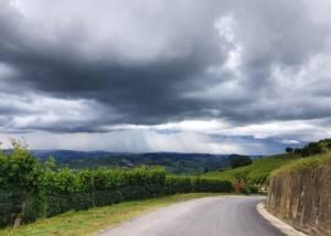 Vineyard Of Azienda Agricola Burzi Alberto Winery