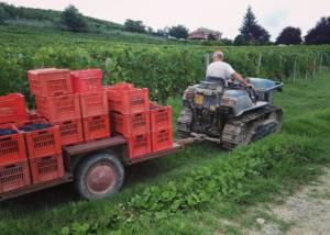 Wine Displayed At Ca 'D Tantin Organic Wines