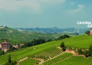Vineyard Of Cascina Boschetti Gomba Winery