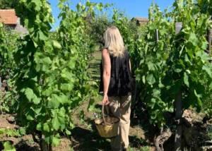 Vineyard Of Fischetti Winery