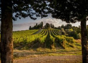 Vineyard Of Poggio Nicchiaia Winery