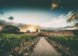 Vineyard Of Tenuta Casadei Winery
