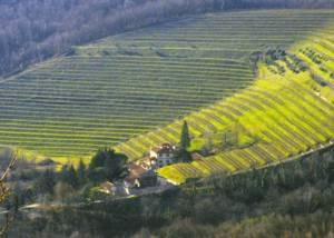 Breathtaking view of the vineyard of the Tenuta Valdomini s.Agricola winery