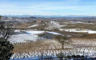 Vineyard Of The Abrigo Giovanni Winery