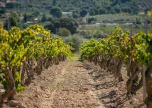 Vineyards of Bell Cros