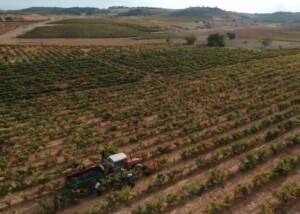 vineyard of the bodegas rodero winery