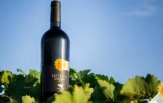 Wine Bottle of Cantine Settesoli Winery