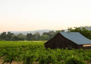 Vineyards of Capo Creek Winery