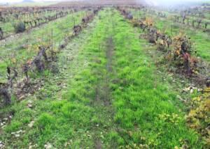 Vineyards at Casa Pardet