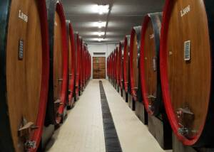 barrels at casa vinicola pietro nera