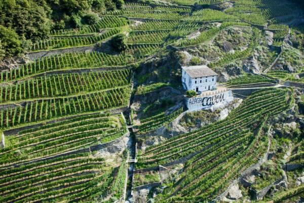aerial view of vineyard and casa vinicola pietro nera