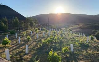 Vineyard Of The Clos De Tres Cantos Winery