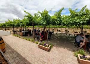 Wine tasting happening in the vineyard of the De Krans Wines