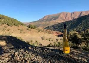 Vineyard Of The Domaine Albert Seltz Winery
