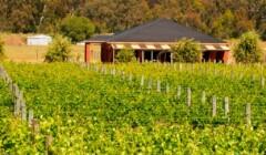 Vineyards and winery building of Domaine Asmara