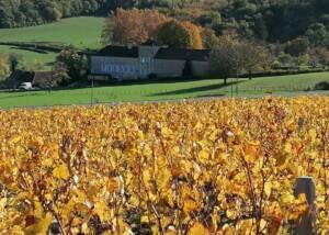 Vineyard Of The Domaine Du Château De Messey Winery