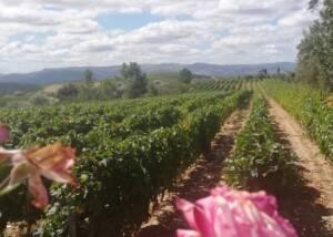 Vineyards at Douro Best