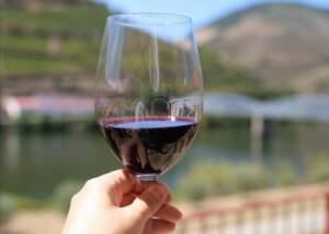 Wine Tasting at Douro Best