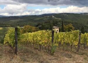 Vineyard of the Fattoria Della Aiola winery