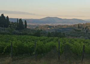 Fattoria Di Bachhereto Vineyards