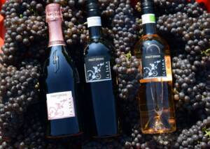 Wine Bottles Of The La Jara Winery
