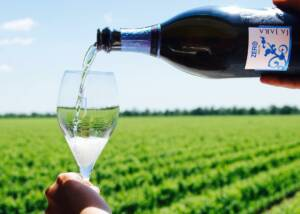 Wine Tasting At La Jara Winery