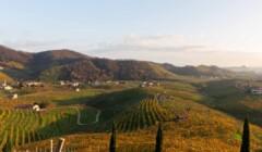 Vineyards of La Tordera