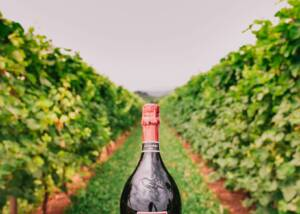 A bottle of La Tordera Winery between the vines
