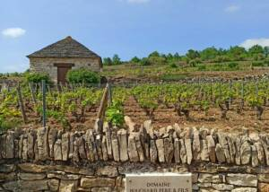 Signboard Of The Maison Bouchard Père & Fils Winery