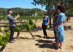 People Touring Around The Vineyard Of Monte Da Casteleja Winery