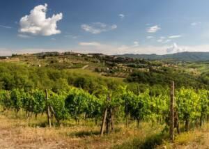 Vineyard Of The Podere L Aja Societa Agricola Winery
