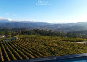 Vineyard Of The Quinta De Santa Cristina Winery